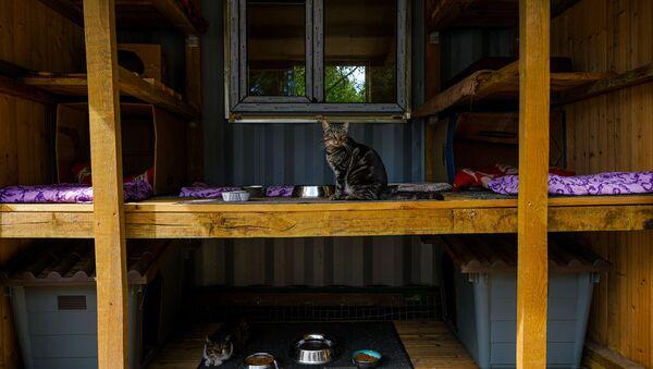 Коты и кошки приюта Ulubele - Sputnik Латвия