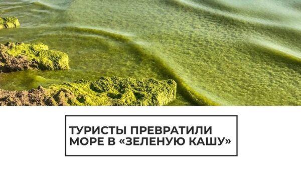 Бродячие водоросли: воды Черного моря превратились в зеленую кашу в разгар сезона - Sputnik Латвия