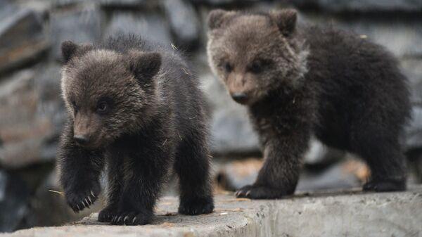 Бурые медвежата - Sputnik Латвия