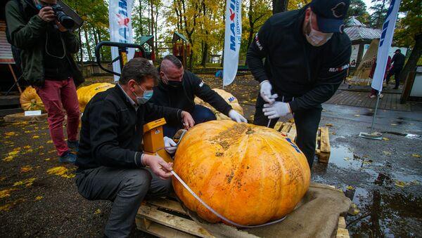 В Рижском зоологическом саду прошел 15-й Латвийский чемпионат самой большой тыквы - Sputnik Латвия