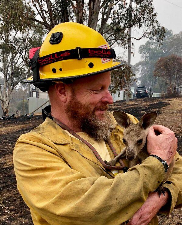 Mežu ugunsgrēkos izglābts ķengurēns Austrālijā, 5. janvāris - Sputnik Latvija