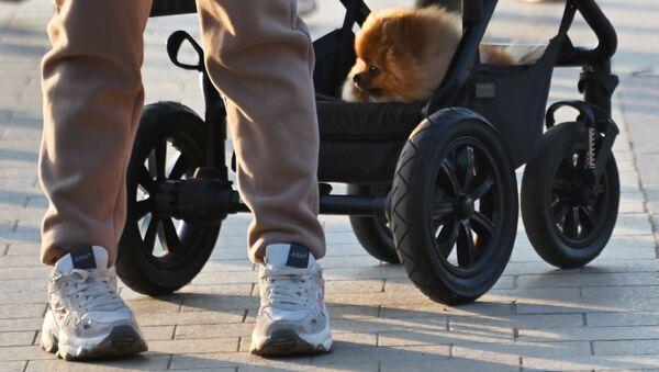 Человек с собакой на прогулке - Sputnik Latvija