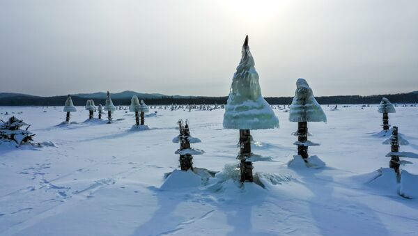 Ледяные грибы на Дальнем Востоке  - Sputnik Латвия