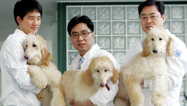 Профессор из Сеульского национального университета Ли Бён-чунь демонстрирует клонированных собак. Южная Корея - Sputnik Latvija