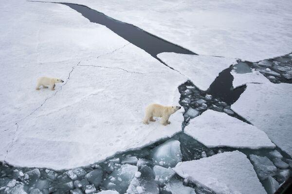 Balto lāču saime - Sputnik Latvija