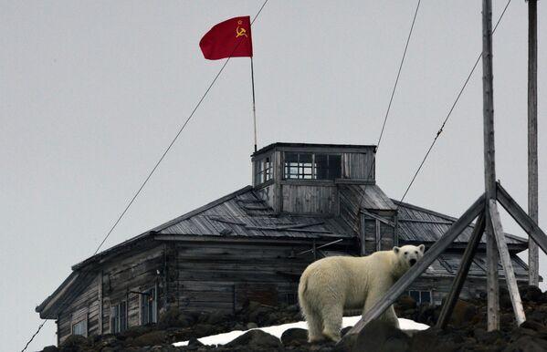 Polārlācis - Sputnik Latvija