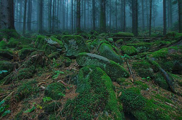 Pats tumšākais mežs Eiropas sirdī – Švarcvalde Vācijā. Par Melno mežu to iedēvēja romieši. Caur skujkoku blīvajiem vainagiem  saules gaisma gandrīz nemaz neiespiežas - Sputnik Latvija