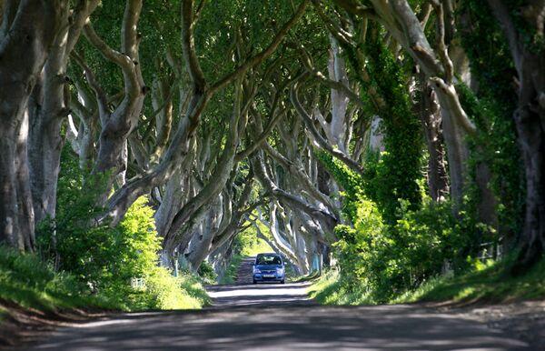 Mežs Dark Hedges Ziemeļīrijā it kā aiznes mūs fantastiskā romānā. Troņu spēles fani, protams, to uzreiz pazīs  - Sputnik Latvija