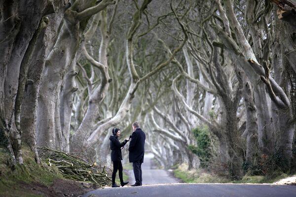 Dižskābaržu aleja Dark Hedges ir ļoti slavena. Žurnālisti daudz rakstīja par divu divsimt gadus vecu koku bojāeju pēc vētras 2016. gadā - Sputnik Latvija