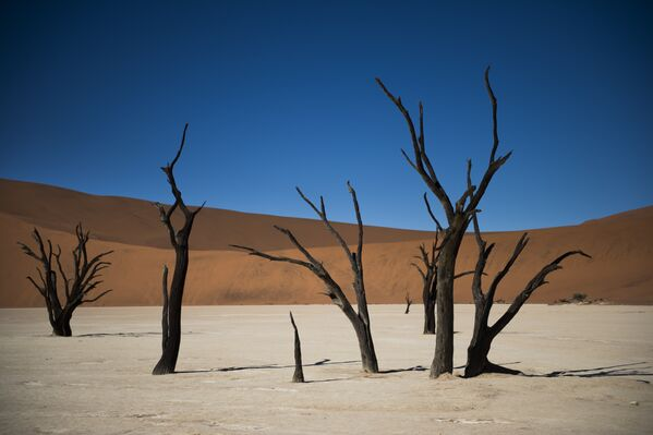 Dedvlejs Namībijā ir dīvaina vieta netālu no slavenā sāls plato Nauklufta parkā. Neauglīgajiem mežiem no nedzīvajiem kokiem ir jau vairāk nekā tūkstoš gadi, un pēdējo 900 gadu laikā tie vispār nav mainījušies. Toreiz klimats mainījās, un reģionā iestājās sausums - Sputnik Latvija
