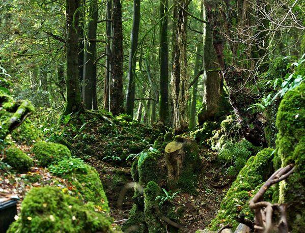 Pazlvuda mežs Glosteršīrā, Anglijā – vēl viena burvīga vieta uz Zemes - Sputnik Latvija