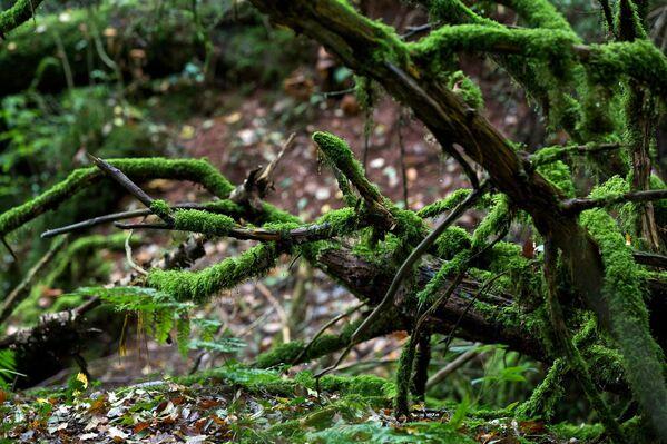 Pazlvudu pilda sūnām apauguši veci koki, pāri strautiem ved čīkstoši tiltiņi - Sputnik Latvija