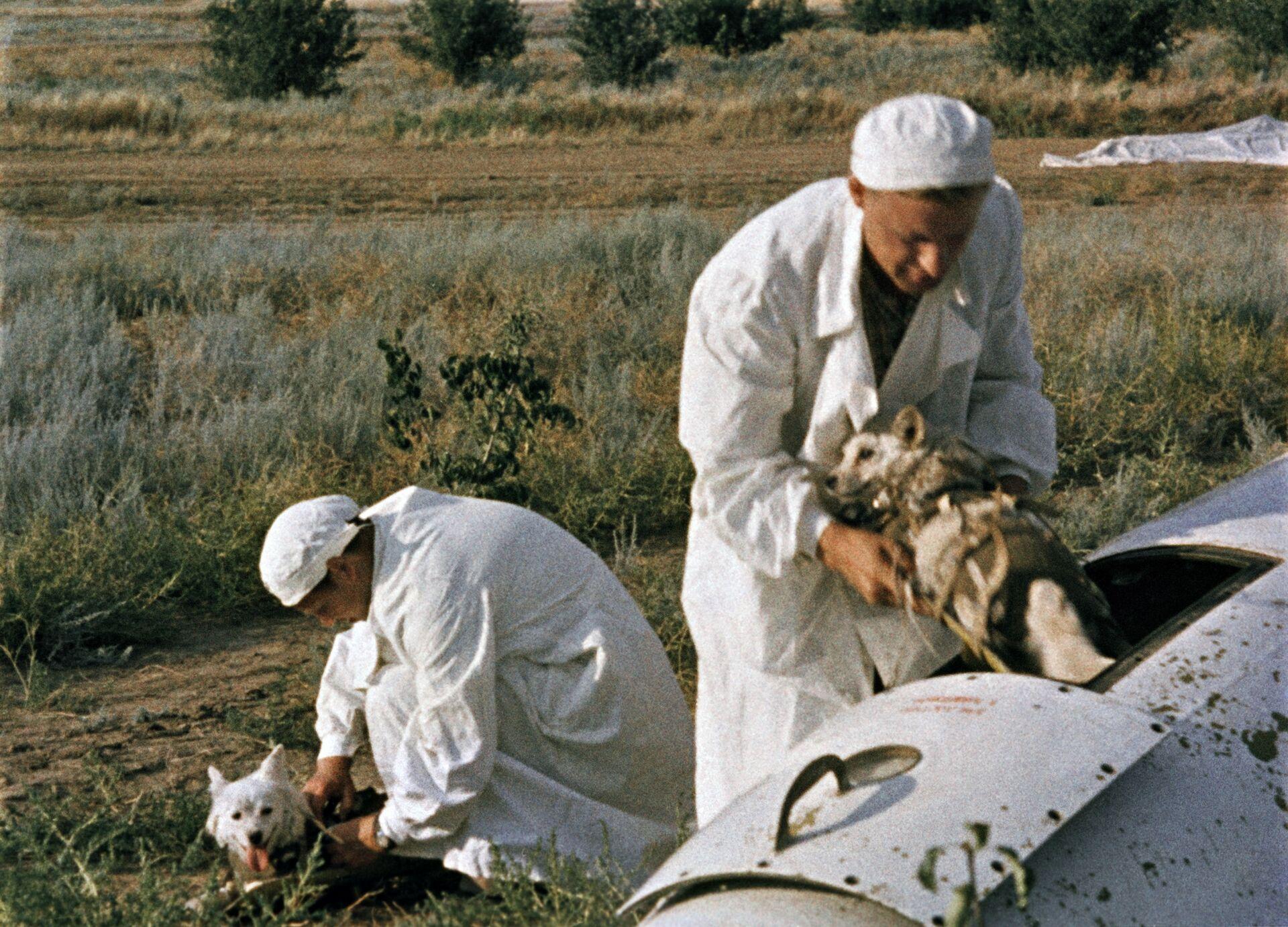 Врачи извлекают подопытных собак из кабины головной части геофизической ракеты на месте приземления. - Sputnik Latvija, 1920, 01.06.2021