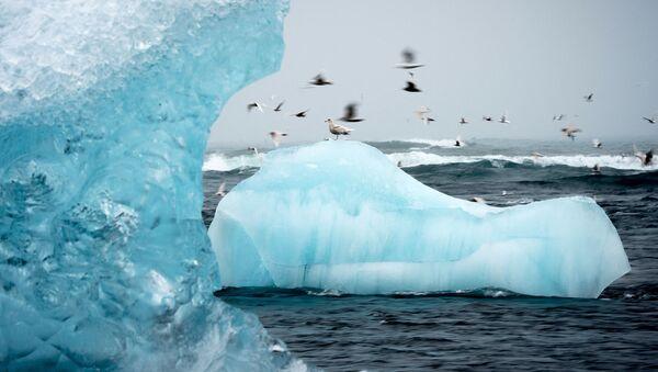 Летающие над айсбергом чайки в лагуне Йёкюльсаурлоун в Исландии - Sputnik Latvija