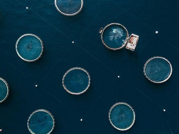Līdz 2050. gadam vajadzēs ražot par 70% vairāk pārtikas produktu, lai apmierinātu augošā cilvēku skaita prasības. Zivju fermas ir efektīva alternatīva zvejniecībai. No otras puses, tās būtiski ietekmē apkāretējo vidi, piemēram, piesārņo ar barību un fekālijām – tās nosēžas jūras dibenā un nopietni kaitē bioloģiskajai daudzveidībai, izplata slimības un antibiotikas - Sputnik Latvija