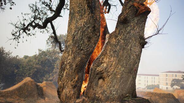 Лесной пожар бушует на склонах Столовой горы - Sputnik Латвия