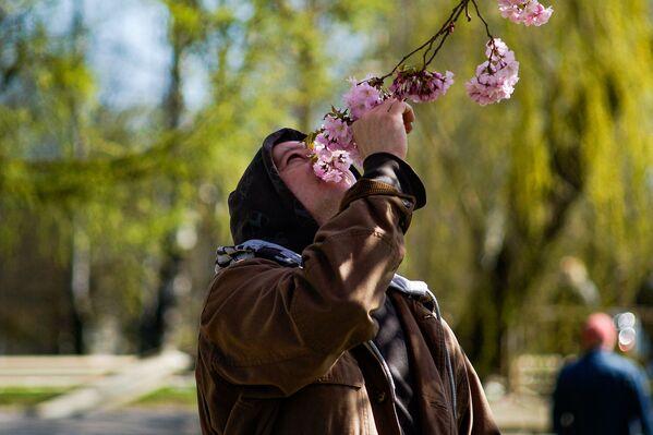 Vai jūs zināt, kā smaržo sakura? - Sputnik Latvija