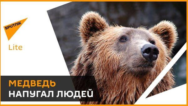 Cilvēki ir panikā: liels lācis klaiņo pa ciemiem un izposta stropus - Sputnik Latvija