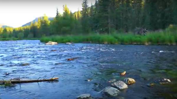 Могучие горы, хвойные леса, зеркальные озера: магия дикой природы Восточного  Казахстана - Sputnik Latvija