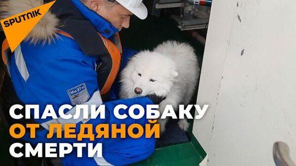 Как экипаж ледокола спас собаку, потерявшуюся во льдах - Sputnik Latvija