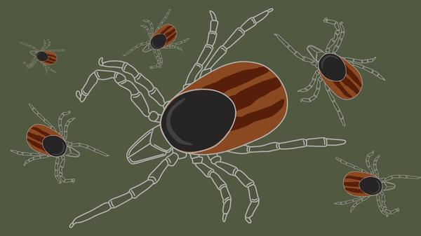 Защита от лесного клеща - Sputnik Латвия