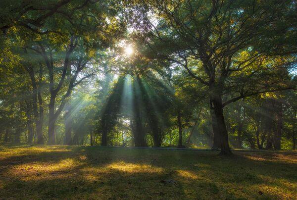 Снимок Лучи в утреннем парке Александра Аседача, ставший одним из победителей фотоконкурса «Моя Планета. Россия в деталях» - Sputnik Латвия