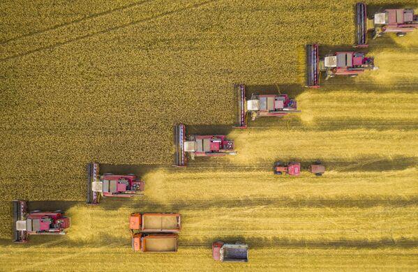 Снимок Битва за урожай Игоря Кляхина, ставший одним из победителей фотоконкурса «Моя Планета. Россия в деталях» - Sputnik Латвия