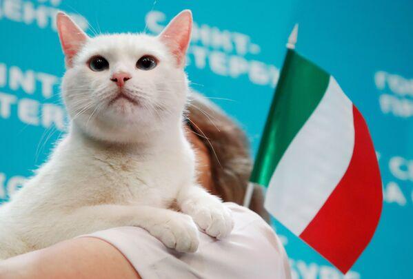 Кот Ахилл, живущий в Эрмитаже в Санкт-Петербурге, выбирает Италию, пытаясь предсказать результат матча открытия Евро-2020 между Италией и Турцией. - Sputnik Латвия