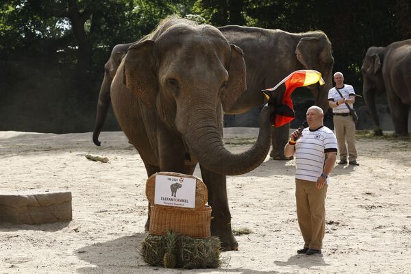 Под руководством хранителя животных Майкла Шмидта 42-летняя слониха Яшода держит флаг Германии, предсказывая результат футбольного матча 1/8 финала чемпионата Европы по футболу Евро-2020 между Англией и Германией. - Sputnik Латвия