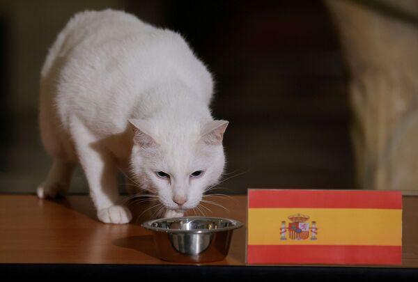Кот Ахилл, проживающий в Эрмитаже в Санкт-Петербурге, выбирает Испанию, пытаясь предсказать результат четвертьфинального матча Евро-2020 между Швейцарией и Испанией. - Sputnik Латвия