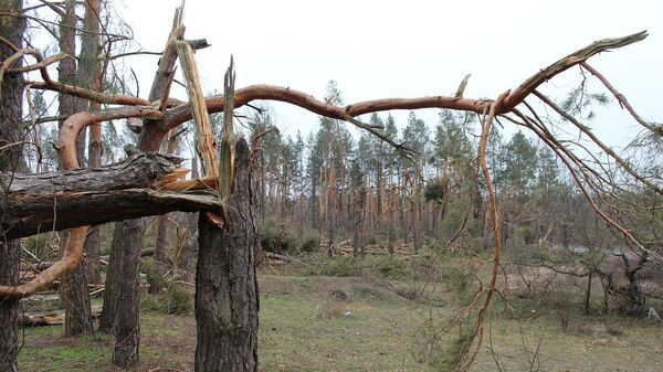 Поваленные деревья - Sputnik Латвия