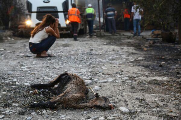 Ugunsgrēkā bojā gājis dzīvnieks Manavgatas apkaimē. - Sputnik Latvija