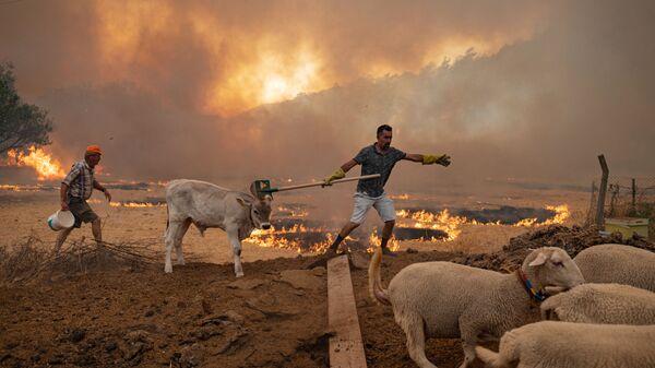 Мужчины со скотом во время природных пожаров в Турции  - Sputnik Латвия