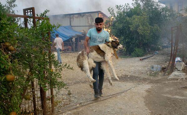 Cilvēks glābj suni no ugunsgrēka Manavgatas apkaimē. - Sputnik Latvija