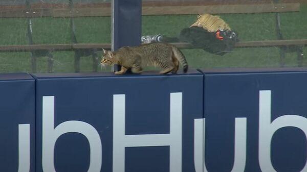 Кот едва не сорвал матч по бейсболу в США  - Sputnik Latvija
