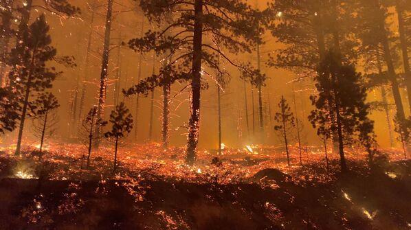 Горящий лес в Калифорнии, США - Sputnik Латвия
