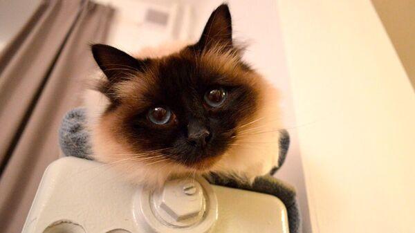 Kaķis uz radiatora  - Sputnik Latvija