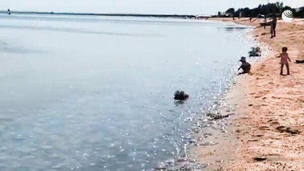 Нашествие медуз в Крыму - Sputnik Latvija