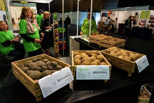 Различные сорта латвийского картофеля - Sputnik Латвия