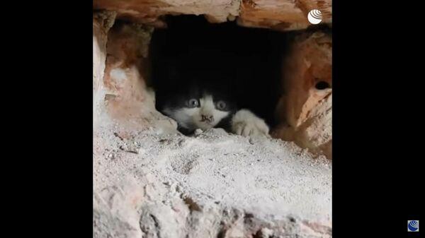 Glābēji atbrīvoja divus kaķēnus  - Sputnik Latvija