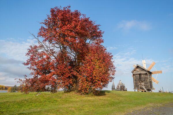 """Šogad Kižos pēc ilgas restaurācijas atvērts """"astotais pasaules brīnums"""" – Tā Kunga Apskaidrošanas baznīca, būvēta 1714. gadā. Turklāt Karēlijā valda īsts zelta rudens! - Sputnik Latvija"""