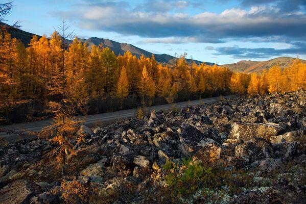 Magadanas apgabalā zelts rotā ne tikai rudeni vien – te ik gadus iegūst apmēram 24,5 tonnas dārgmetāla. Taču pirmatnīgā daba ir vēl skaistāka. Skarbais novads ar īsto vasaru (jūnijs vēl ir pavasaris) un zelta rudeni augustā un septembrī (drīz beigsies!) piesaista aizvien vairāk ciemiņu. Nesen uzbūvēta jauna tūrisma bāze, ievesti dzīvnieki no Jakutijas. Ceļotāji jau interesējas - Sputnik Latvija