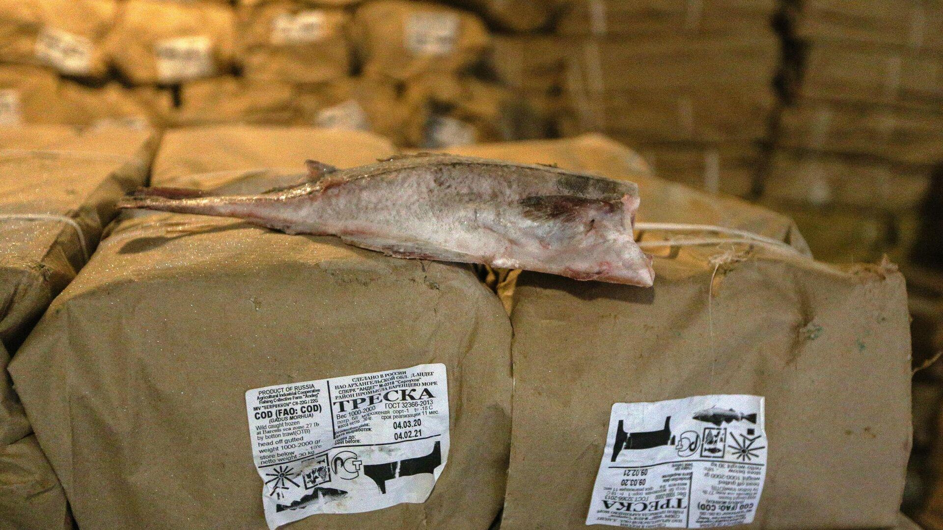 Выгрузка рыбы в Мурманском морском торговом порту - Sputnik Latvija, 1920, 21.09.2021