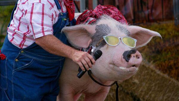 Izrāde The Pork Chop Revue Lūivilas gadatirgū ASV - Sputnik Latvija