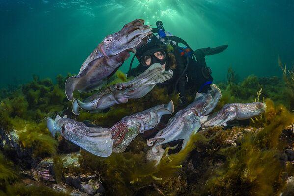 Daiveris sastapies ar tinteszivi, Austrālijas dienvidu daļa - Sputnik Latvija
