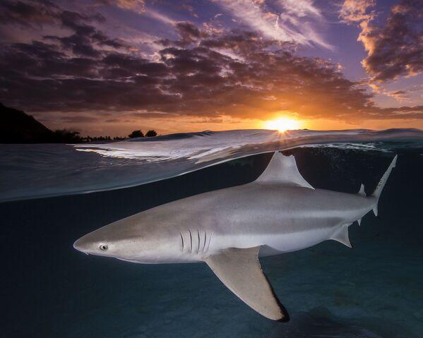 """Prēmiju """"Female Fifty Fathoms Award"""" saņēmusi Renē Kapocola (Renee Capozzola) par rifu haizivs fotouzņēmumu saulrietā - Sputnik Latvija"""