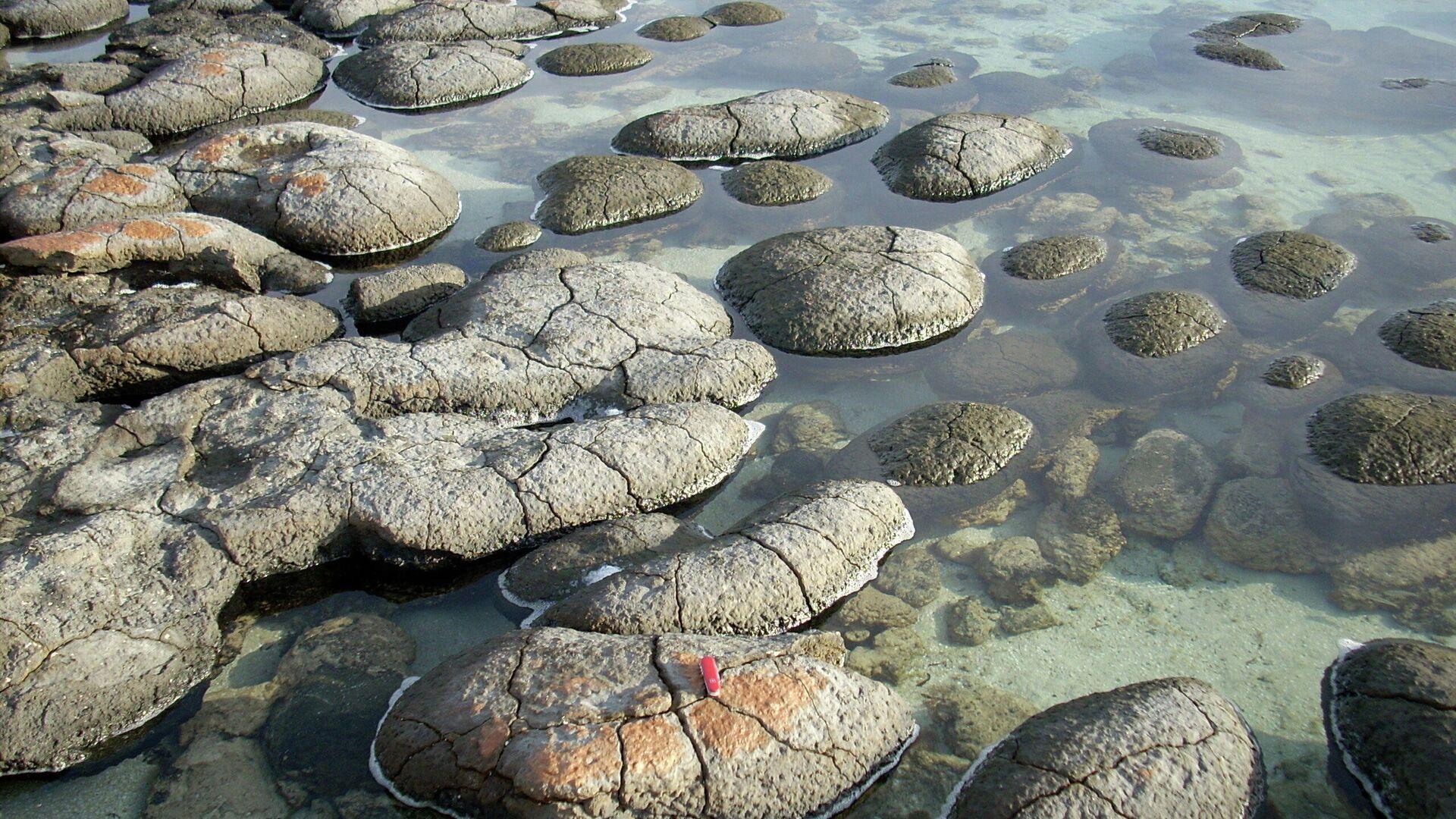 Stromatolīti - Sputnik Latvija, 1920, 26.09.2021
