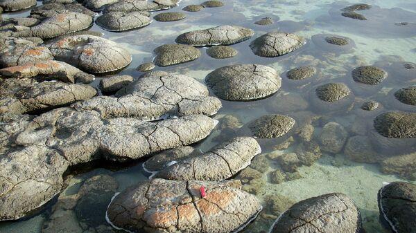 Stromatolīti - Sputnik Latvija