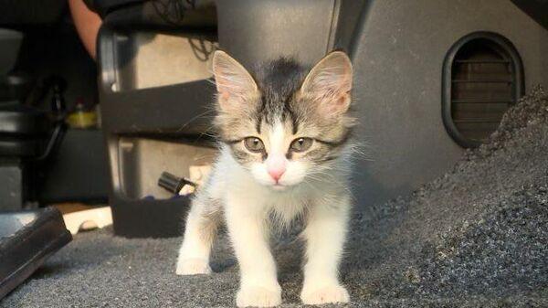 Пушистый попутчик: дальнобойщик приютил котенка в кабине фургона - Sputnik Latvija