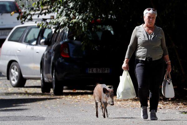 Patiesībā gan dzīvnieki ir itin draudzīgi un pie pilsētas pieraduši – viņi nebaidās ne no garāmgājējiem, ne transporta - Sputnik Latvija